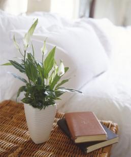 Gợi ý loại cây trồng nên trang trí trong nhà